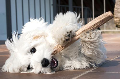 apua-monenlaisiin-koirien-ruokintaongelmiin