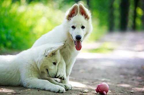 koiran-ruokintaongelmiin-ravitsemusneuvojan-apua